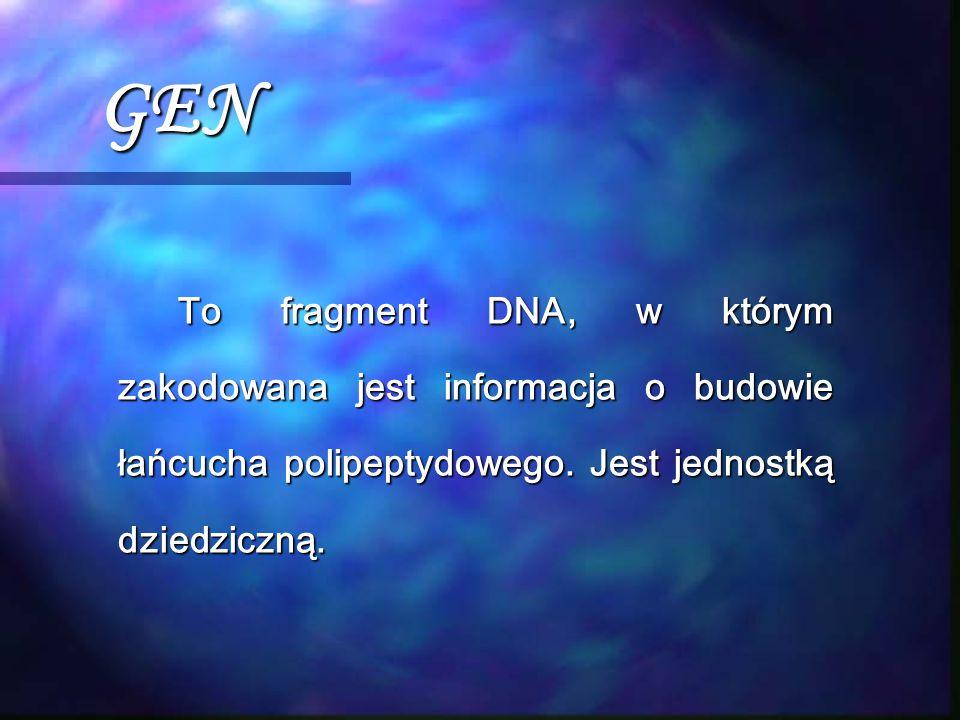 GEN To fragment DNA, w którym zakodowana jest informacja o budowie łańcucha polipeptydowego. Jest jednostką dziedziczną.
