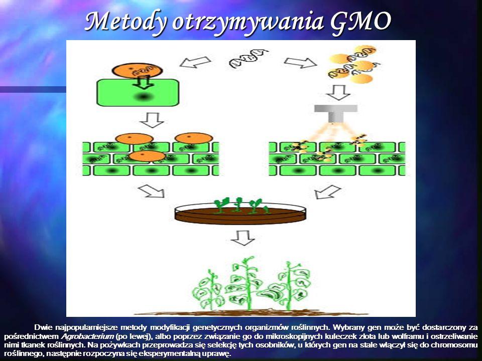 Metody otrzymywania GMO Dwie najpopularniejsze metody modyfikacji genetycznych organizmów roślinnych. Wybrany gen może być dostarczony za pośrednictwe