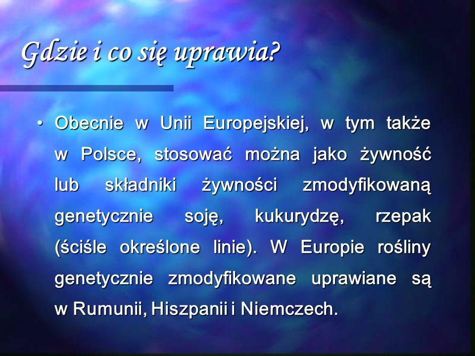 Gdzie i co się uprawia? Obecnie w Unii Europejskiej, w tym także w Polsce, stosować można jako żywność lub składniki żywności zmodyfikowaną genetyczni