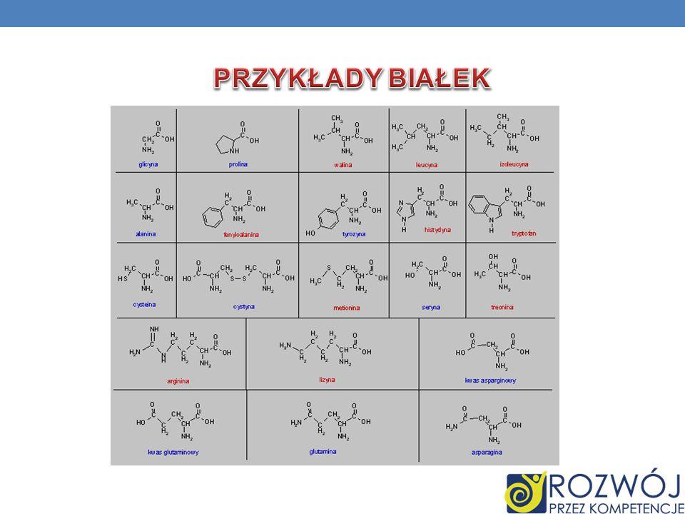 Białka są to polimery aminokwasów białkowych połączone ze sobą wiązaniami peptydowymi, w których liczba reszt aminokwasowych przekracza 100. Głównymi