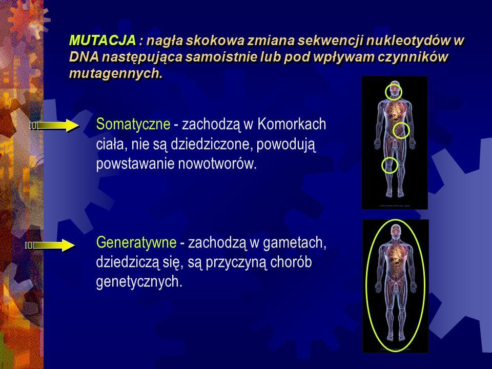 MUTACJA : nagła skokowa zmiana sekwencji nukleotydów w DNA następująca samoistnie lub pod wpływam czynników mutagennych. Somatyczne - zachodzą w Komor