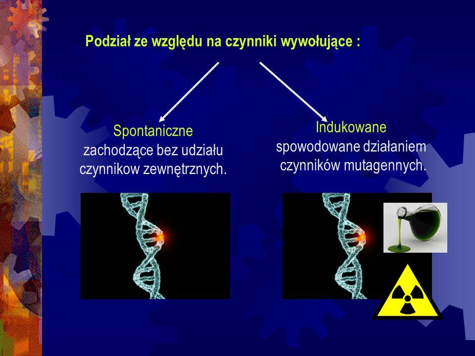 Czynniki mutagenne: fizyczne - promienie UV, promieniowanie jonizujące ( pr.
