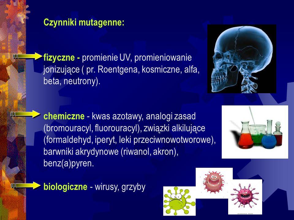Czynniki mutagenne: fizyczne - promienie UV, promieniowanie jonizujące ( pr. Roentgena, kosmiczne, alfa, beta, neutrony). chemiczne - kwas azotawy, an