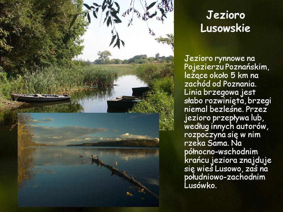 Jezioro Lusowskie Jezioro rynnowe na Pojezierzu Poznańskim, leżące około 5 km na zachód od Poznania. Linia brzegowa jest słabo rozwinięta, brzegi niem