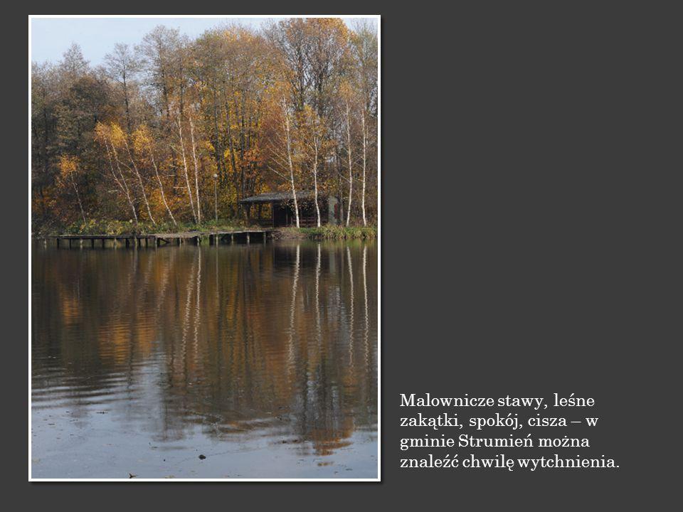 Malownicze stawy, leśne zakątki, spokój, cisza – w gminie Strumień można znaleźć chwilę wytchnienia.