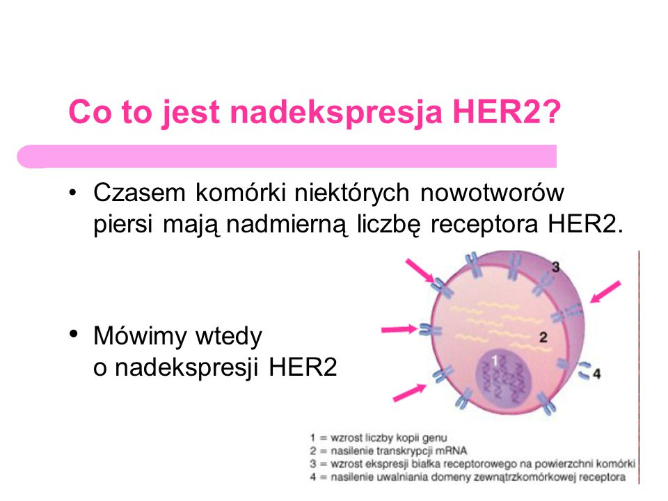 Co to jest nadekspresja HER2? Czasem komórki niektórych nowotworów piersi mają nadmierną liczbę receptora HER2. Mówimy wtedy o nadekspresji HER2