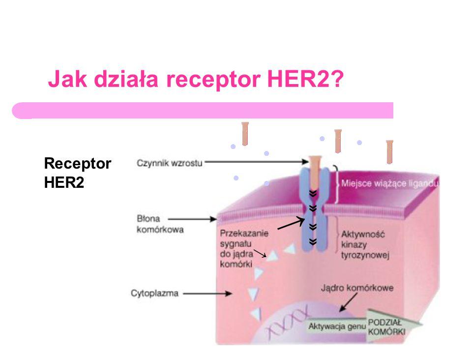 Jak działa receptor HER2? Receptor HER2 ● ● ● ● ● ● » » » » → →