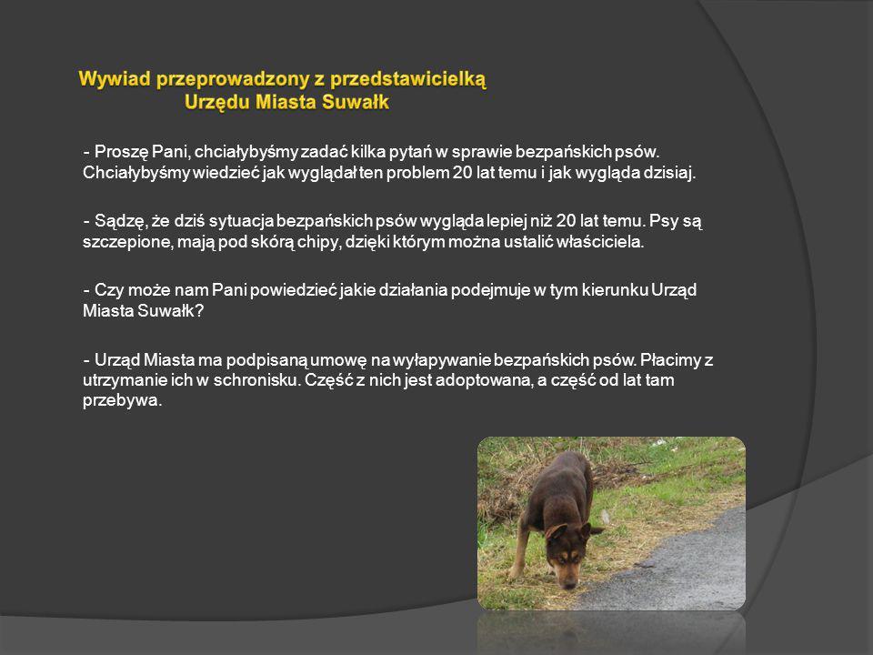 - Proszę Pani, chciałybyśmy zadać kilka pytań w sprawie bezpańskich psów. Chciałybyśmy wiedzieć jak wyglądał ten problem 20 lat temu i jak wygląda dzi