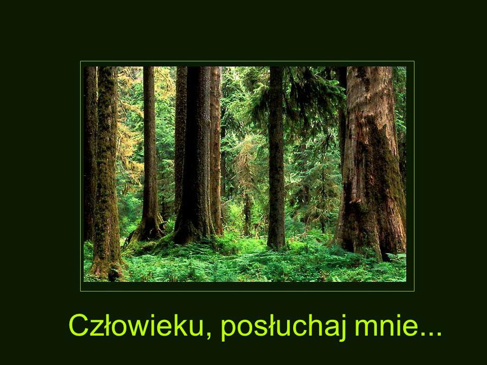 Modlitwa Drzewa
