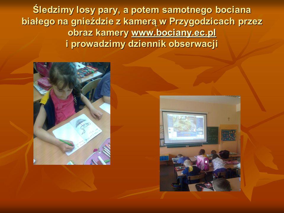 Śledzimy losy pary, a potem samotnego bociana białego na gnieździe z kamerą w Przygodzicach przez obraz kamery www.bociany.ec.pl i prowadzimy dziennik