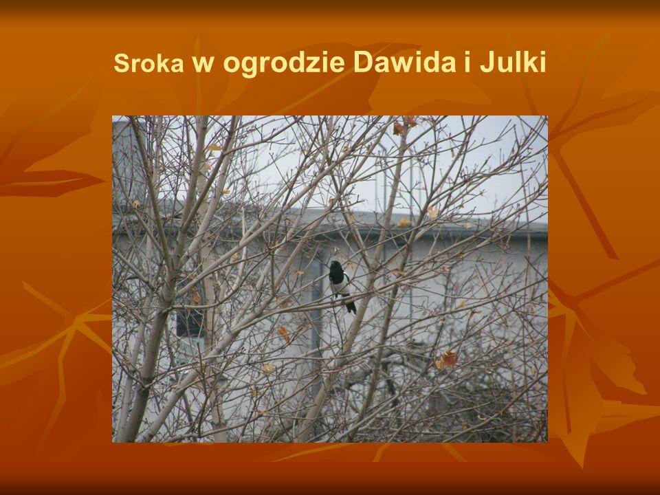Sroka w ogrodzie Dawida i Julki