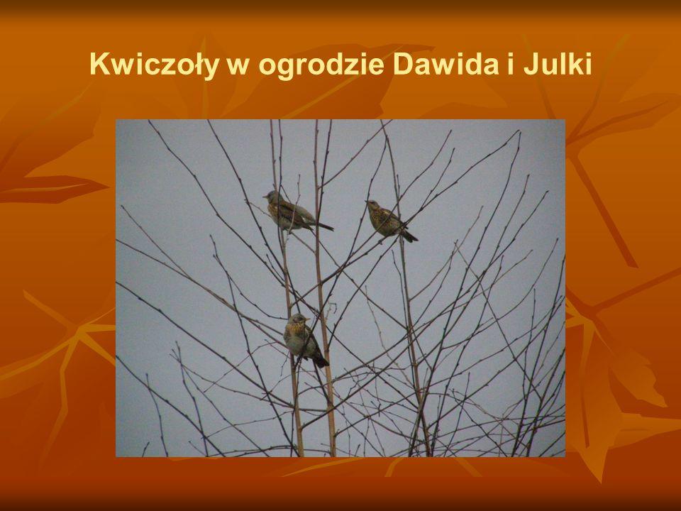 Kwiczoły w ogrodzie Dawida i Julki