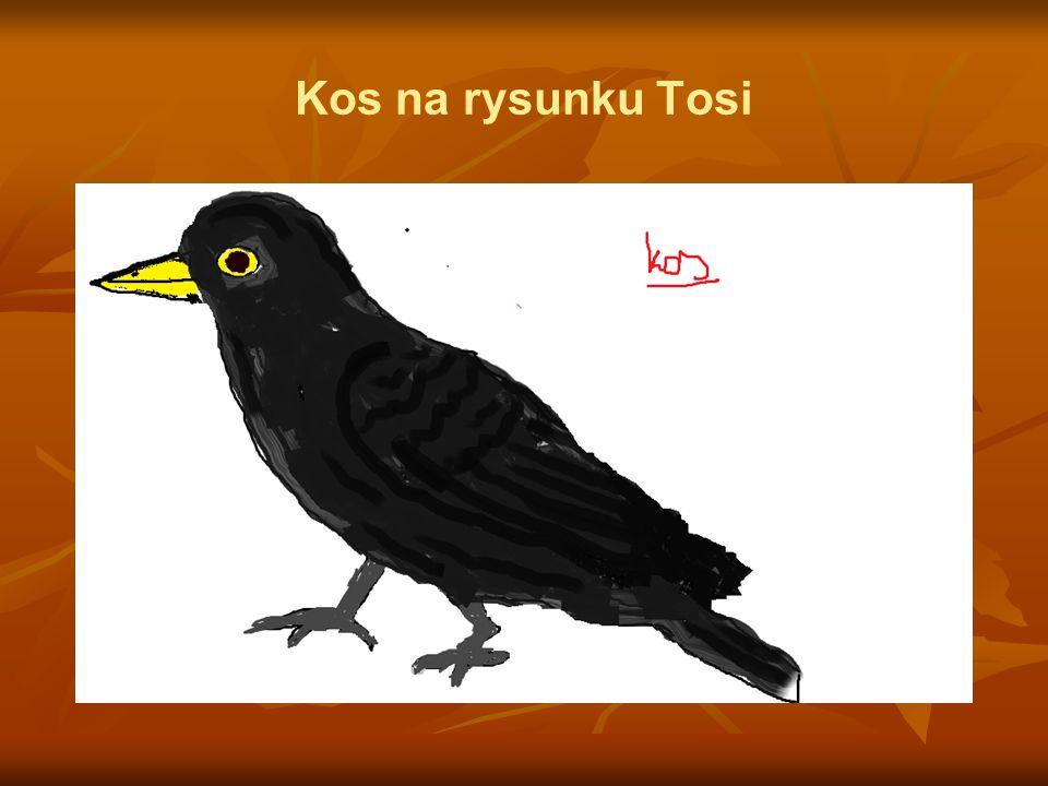 Kos na rysunku Tosi