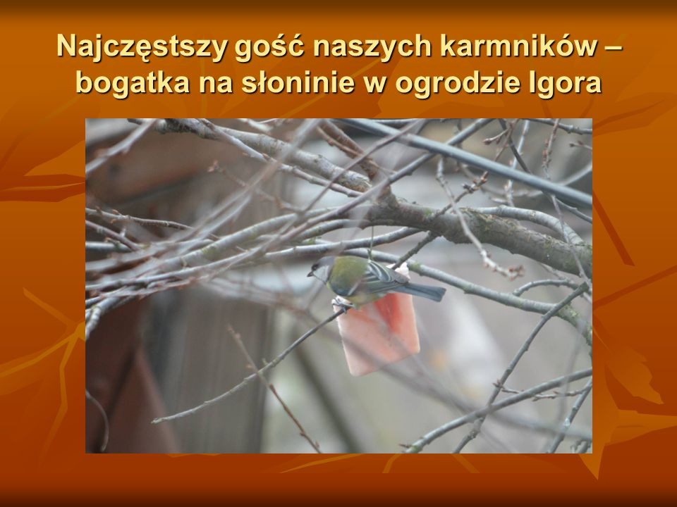 Bogatka w ogrodzie Igora