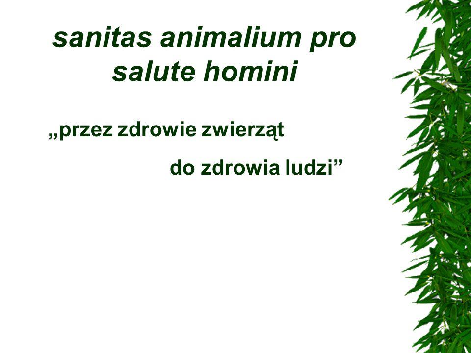 """sanitas animalium pro salute homini """"przez zdrowie zwierząt do zdrowia ludzi"""""""