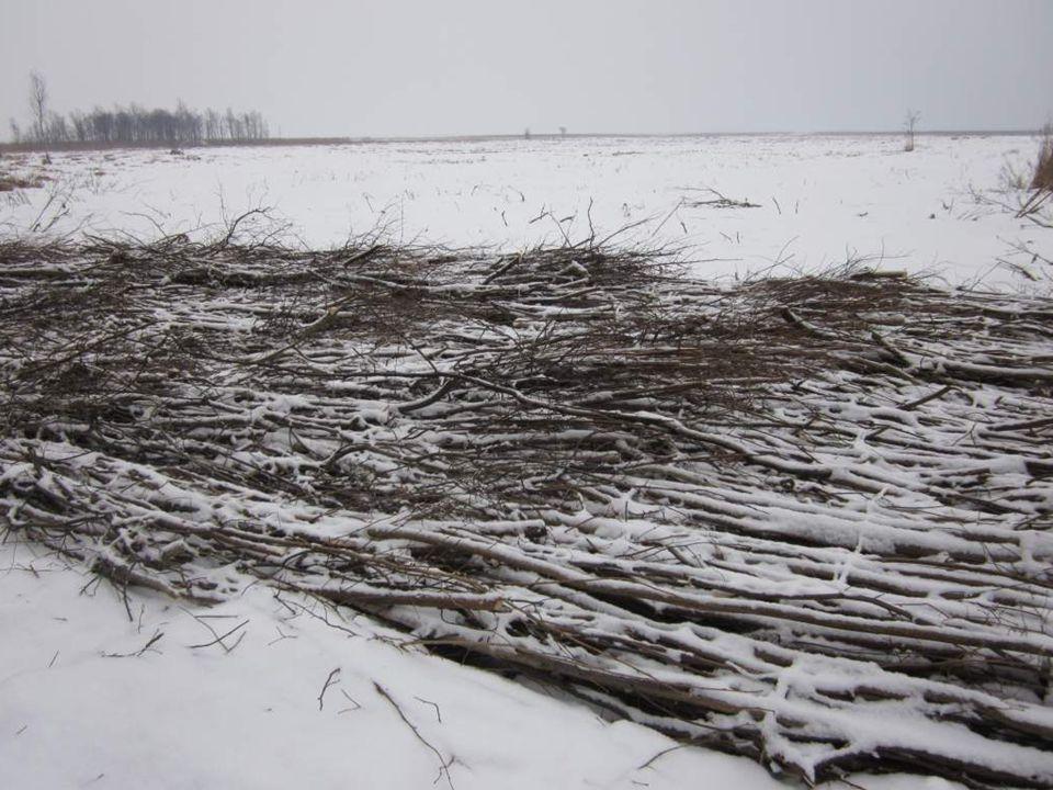 Cele projektu w dolinie Biebrzy Zwiększenie i poprawienie jakości siedlisk odpowiednich dla wodniczki.