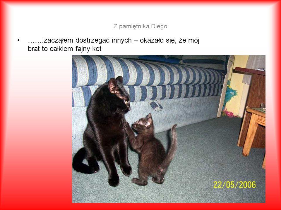 Z pamiętnika Diego …….zacząłem dostrzegać innych – okazało się, że mój brat to całkiem fajny kot