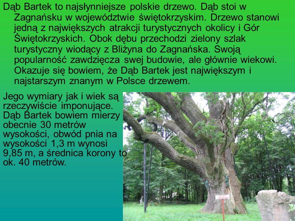 Dąb Bartek to najsłynniejsze polskie drzewo. Dąb stoi w Zagnańsku w województwie świętokrzyskim. Drzewo stanowi jedną z największych atrakcji turystyc