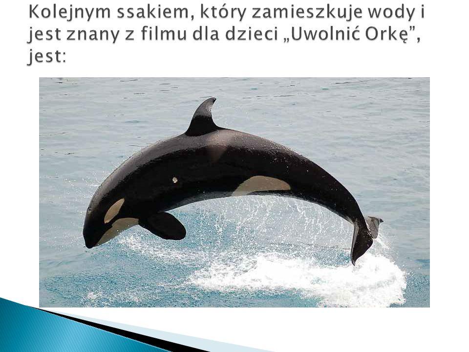  To gatunek walenia z rodziny delfinowatych.