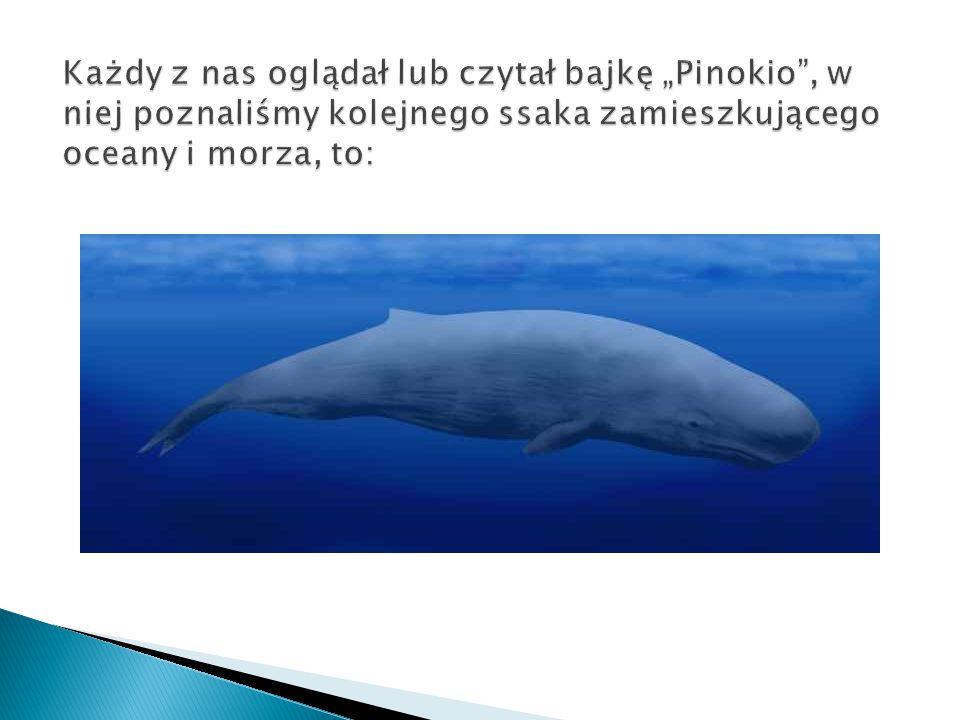  To także ssak z rodziny waleni.Wieloryby są największymi zwierzętami zamieszkującymi Ziemię.