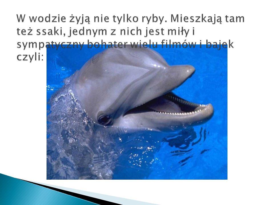  Jest ssakiem wodnym, charakteryzującym się wydłużonym pyskiem.