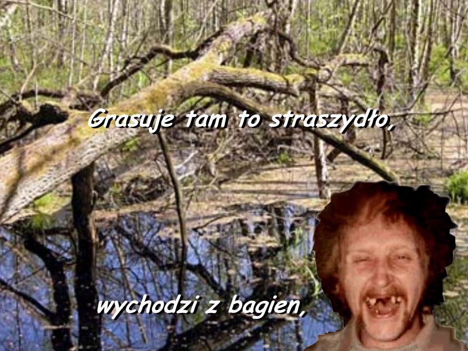 Grasuje tam to straszydło, Grasuje tam to straszydło, wychodzi z bagien, wychodzi z bagien,