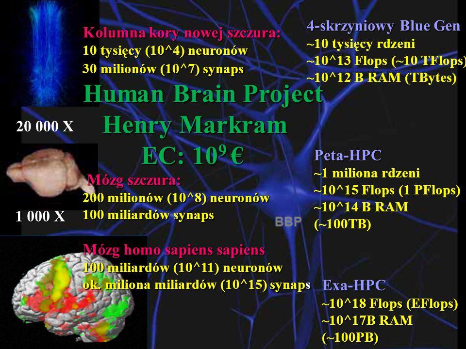 20 000 X 1 000 X Kolumna kory nowej szczura: 10 tysięcy (10^4) neuronów 30 milionów (10^7) synaps Human Brain Project Henry Markram Henry Markram EC: 10 9 € EC: 10 9 € Mózg szczura: Mózg szczura: 200 milionów (10^8) neuronów 100 miliardów synaps Mózg homo sapiens sapiens 100 miliardów (10^11) neuronów ok.