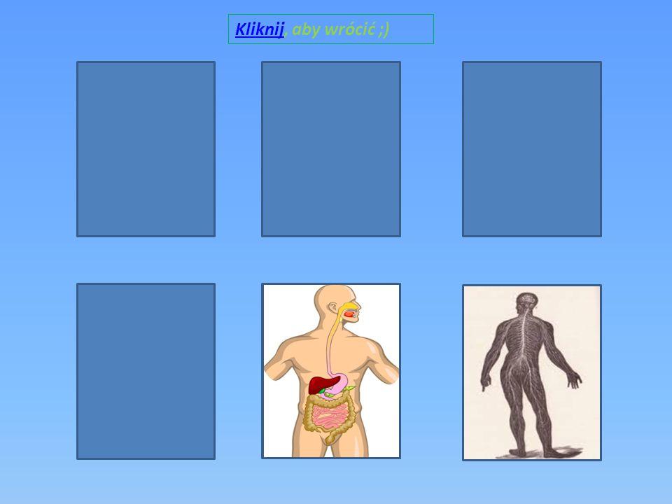 Układ oddechowy jest to zespół narządów umożliwiających organizmowi oddychanie.