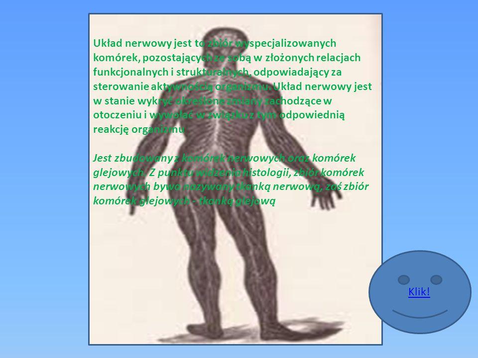 Układ nerwowy jest to zbiór wyspecjalizowanych komórek, pozostających ze sobą w złożonych relacjach funkcjonalnych i strukturalnych, odpowiadający za sterowanie aktywnością organizmu.