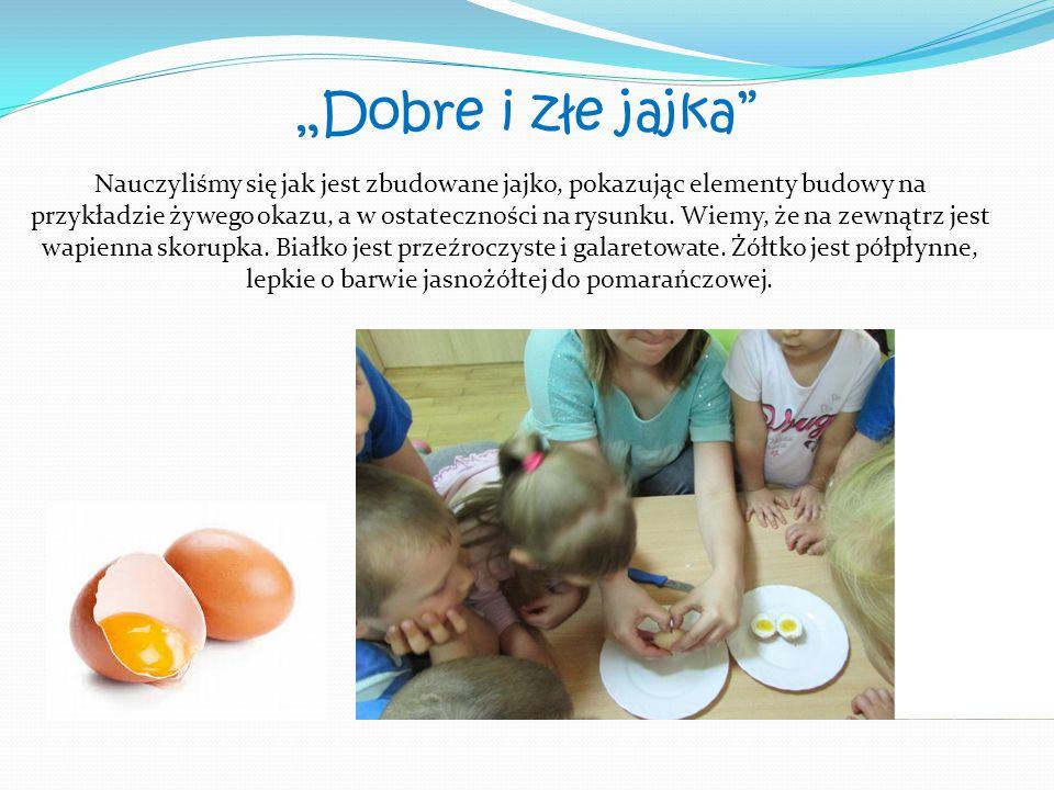 """""""Dobre i złe jajka"""" Nauczyliśmy się jak jest zbudowane jajko, pokazując elementy budowy na przykładzie żywego okazu, a w ostateczności na rysunku. Wie"""