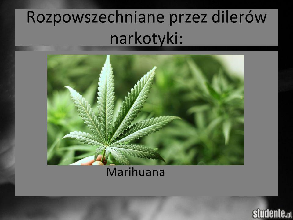 Rozpowszechniane przez dilerów narkotyki: Marihuana