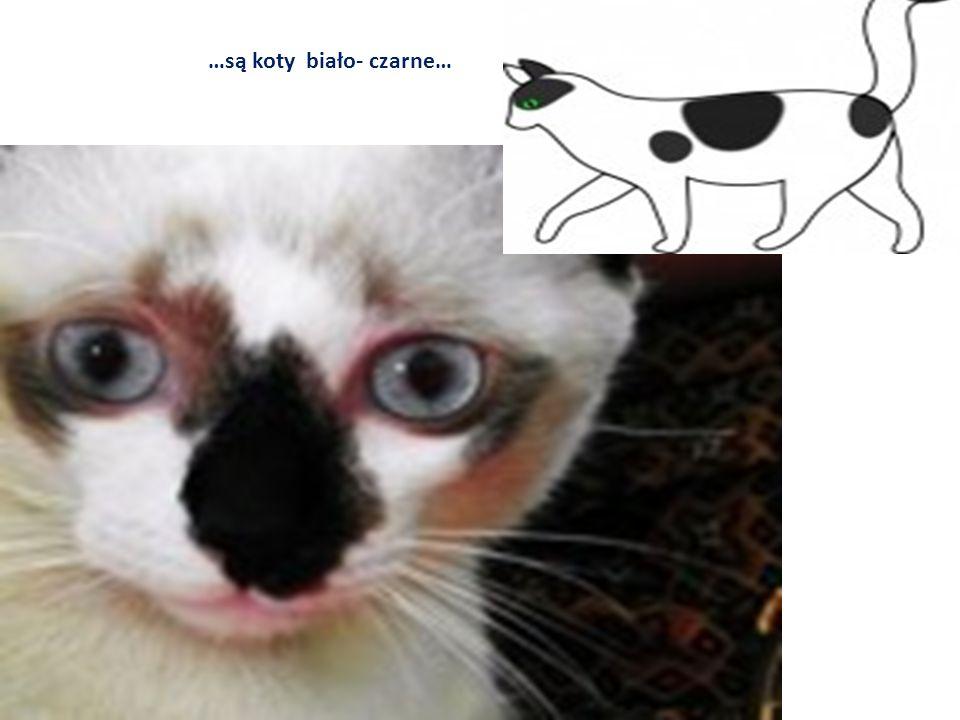 …są koty biało- czarne…