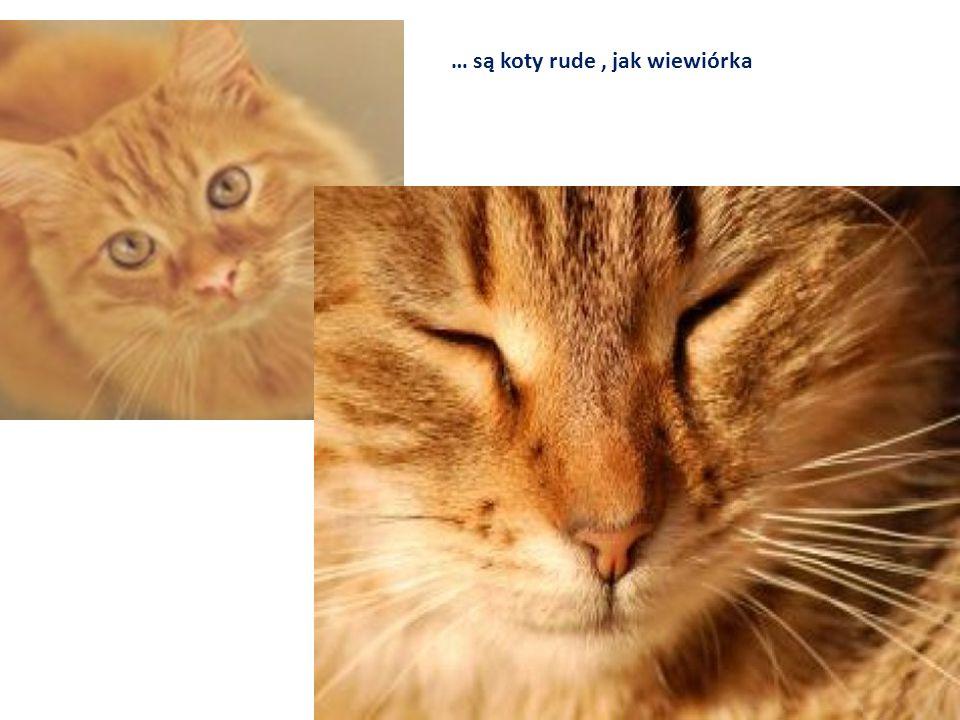 … są koty rude, jak wiewiórka