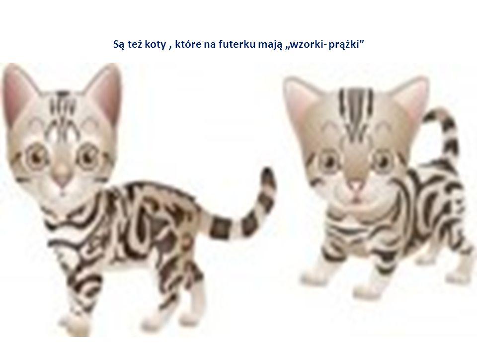 """Są też koty, które na futerku mają """"wzorki- prążki"""