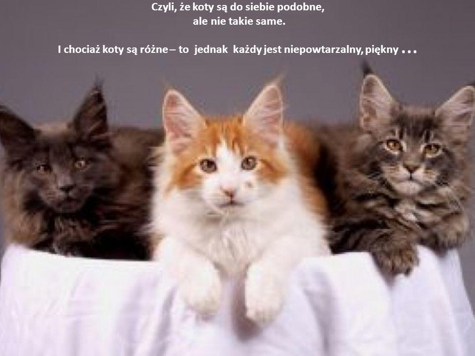Czyli, że koty są do siebie podobne, ale nie takie same.