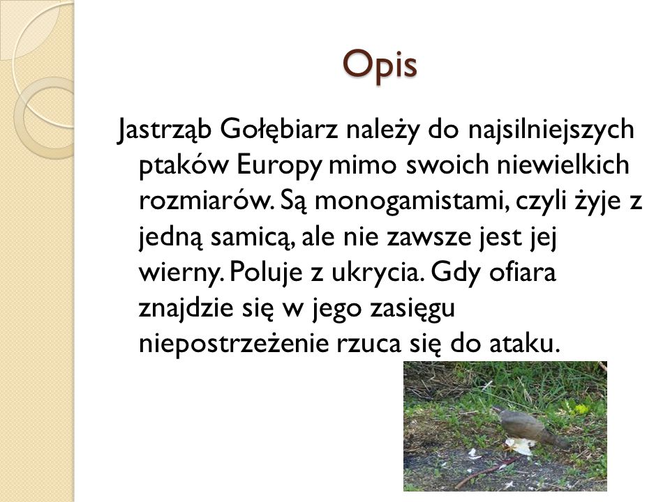 Opis Jastrząb Gołębiarz należy do najsilniejszych ptaków Europy mimo swoich niewielkich rozmiarów. Są monogamistami, czyli żyje z jedną samicą, ale ni