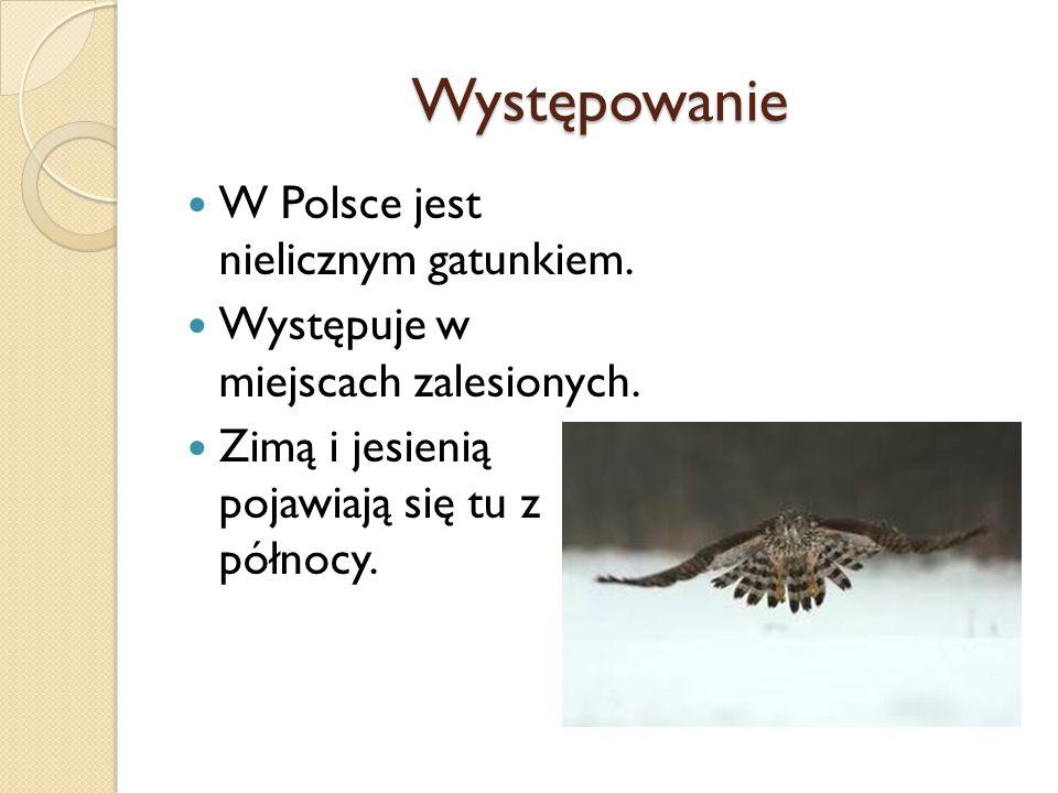 Występowanie W Polsce jest nielicznym gatunkiem. Występuje w miejscach zalesionych. Zimą i jesienią pojawiają się tu z północy.