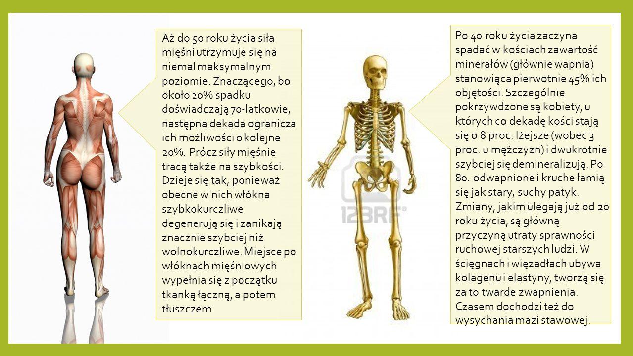 Aż do 50 roku życia siła mięśni utrzymuje się na niemal maksymalnym poziomie. Znaczącego, bo około 20% spadku doświadczają 70-latkowie, następna dekad
