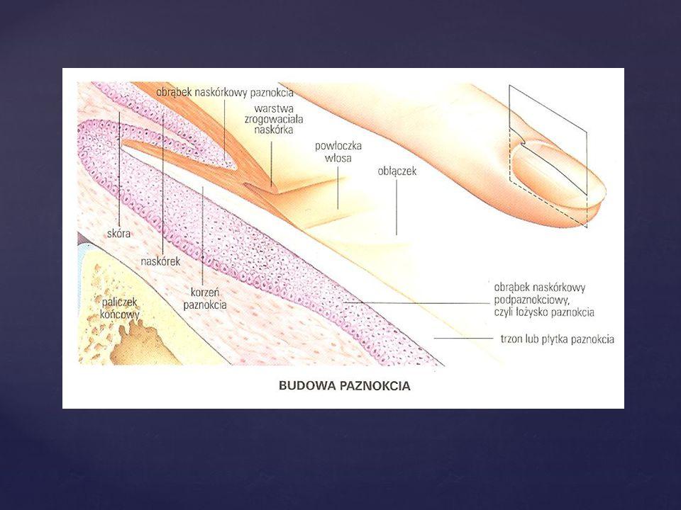Leczenie kosmetyczno podologiczne wykorzystuje metody korekcji płytek paznokciowych ogólnie opisywanych jako ortonyksja.