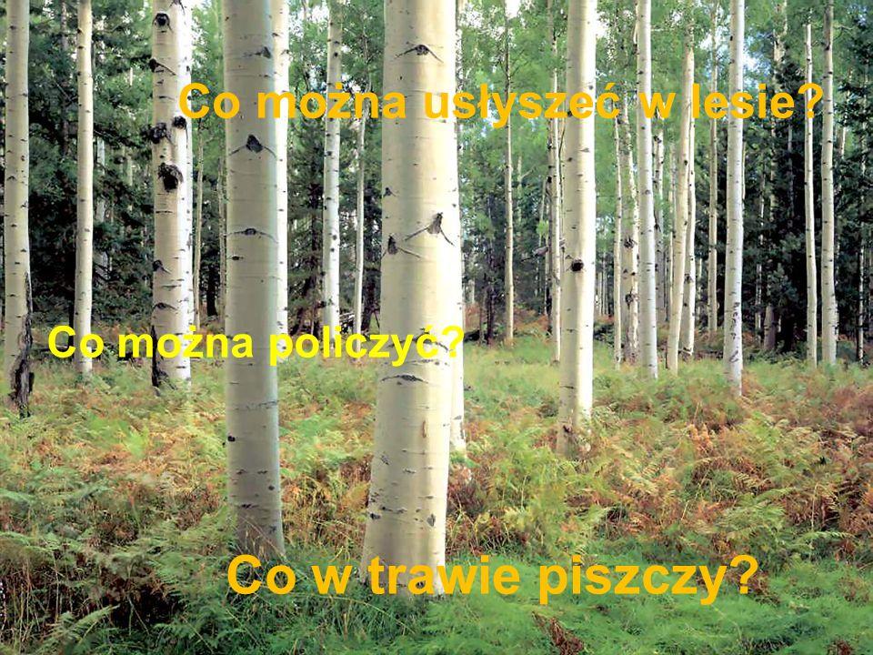 Co można usłyszeć w lesie? Co w trawie piszczy? Co można policzyć?