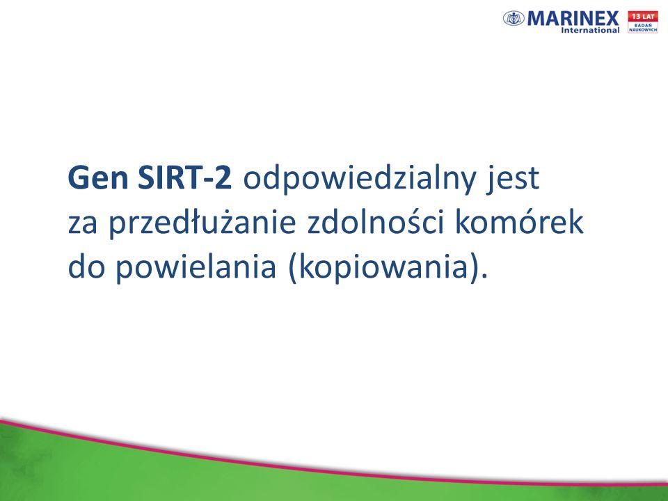 Gen SIRT-2 odpowiedzialny jest za przedłużanie zdolności komórek do powielania (kopiowania).