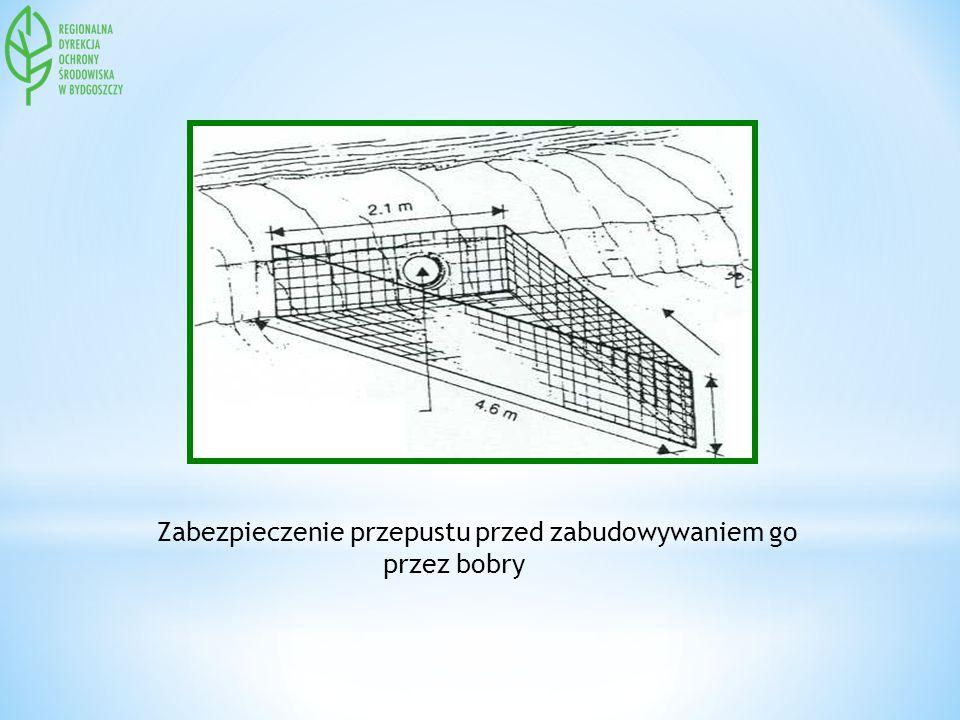 Zabezpieczenie przepustu przed zabudowywaniem go przez bobry