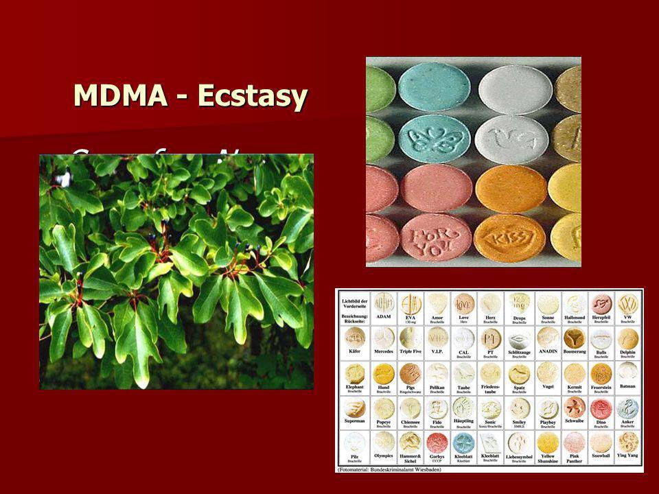 Sassafras Nees Sassafras Nees MDMA - Ecstasy
