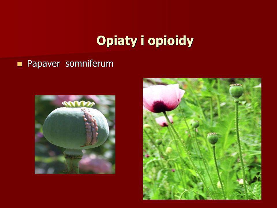 PochodneAlkaloid Średnia zawartość w opium (%) Fenantrenu Morfina10 Kodeina0,5 Tebaina0,2 Izochinoliny Papaweryna1,0 Narkotyna6,0 Narceina0,3 Skład opium