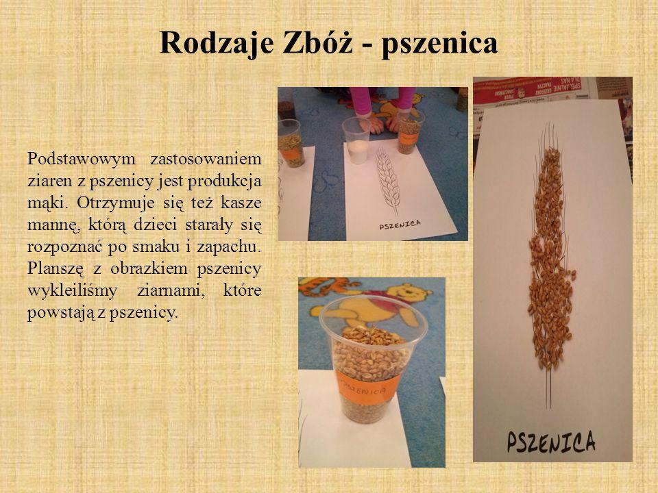 Podstawowym zastosowaniem ziaren z pszenicy jest produkcja mąki. Otrzymuje się też kasze mannę, którą dzieci starały się rozpoznać po smaku i zapachu.