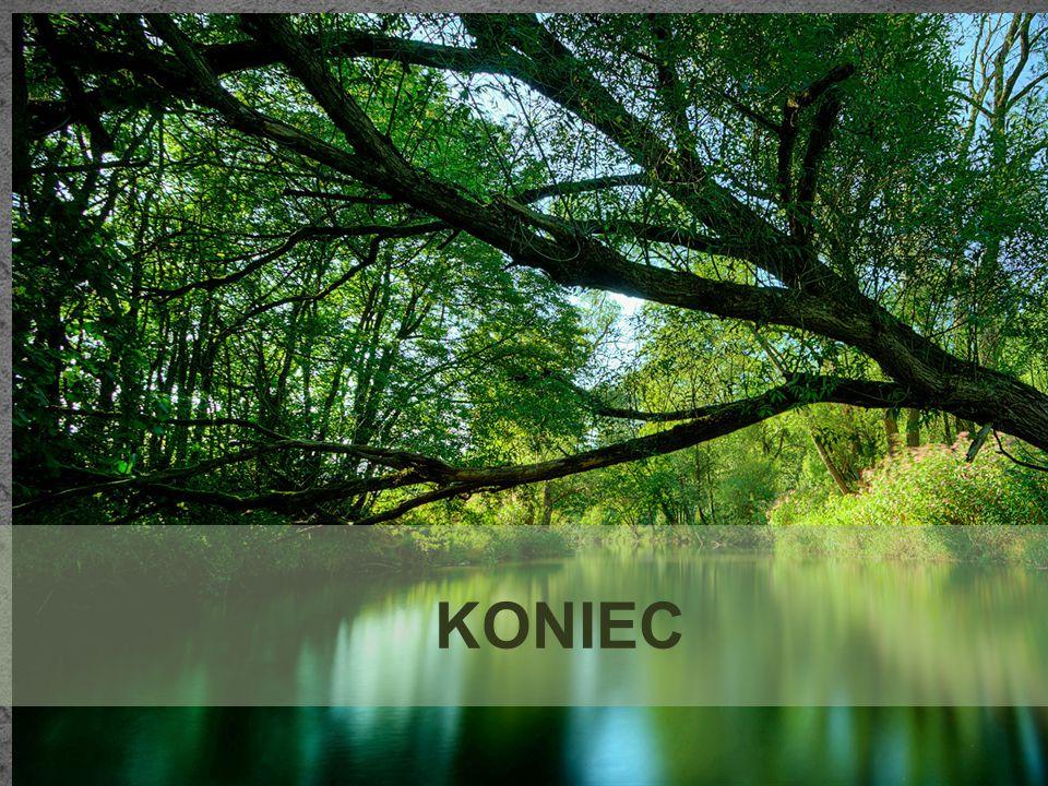 BIBLIOGRAFIA http://www.czestochowa.pl/page/ - strona główna miasta Częstochowy cz.1,http://www.czestochowa.pl/page/ http://www.czestochowa.pl/page/379,pomniki-przyrody---cz-1.html – informacje na temat pomników, http://www.czestochowa.pl/page/379,pomniki-przyrody---cz-1.html http://pl.wikipedia.org/wiki/Aleja_Brzozowa – zdjęcia pomników http://pl.wikipedia.org/wiki/Aleja_Brzozowa http://www.czestochowa.pl/page/381,pomniki-przyrody---cz-3.html -strona główna miasta Częstochowy cz.2, http://www.czestochowa.pl/page/381,pomniki-przyrody---cz-3.html http://www.parki.org.pl/parki-miejskie/dzielnicowy-park-parkitka-wraz-z-ulica-bialsk - informacje ogólne, http://www.parki.org.pl/parki-miejskie/dzielnicowy-park-parkitka-wraz-z-ulica-bialsk http://www.przyroda.katowice.pl/pl/ochrona-przyrody/obiekty-ochrony-przyrody/pomniki- przyrody-nieozywionej -przyroda województwa śląskiego, PRAWA AUTORSKIE NALEŻĄ DO ŁUKASZA SOKOŁOWSKIEGO I ARTURA PAPROTNEGO http://www.przyroda.katowice.pl/pl/ochrona-przyrody/obiekty-ochrony-przyrody/pomniki- przyrody-nieozywionej