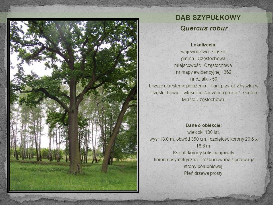 Lokalizacja: województwo - śląskie gmina - Częstochowa miejscowość - Częstochowa nr mapy ewidencyjnej – 362 nr działki – 50 bliższe określenie położenia – Park przy ul.