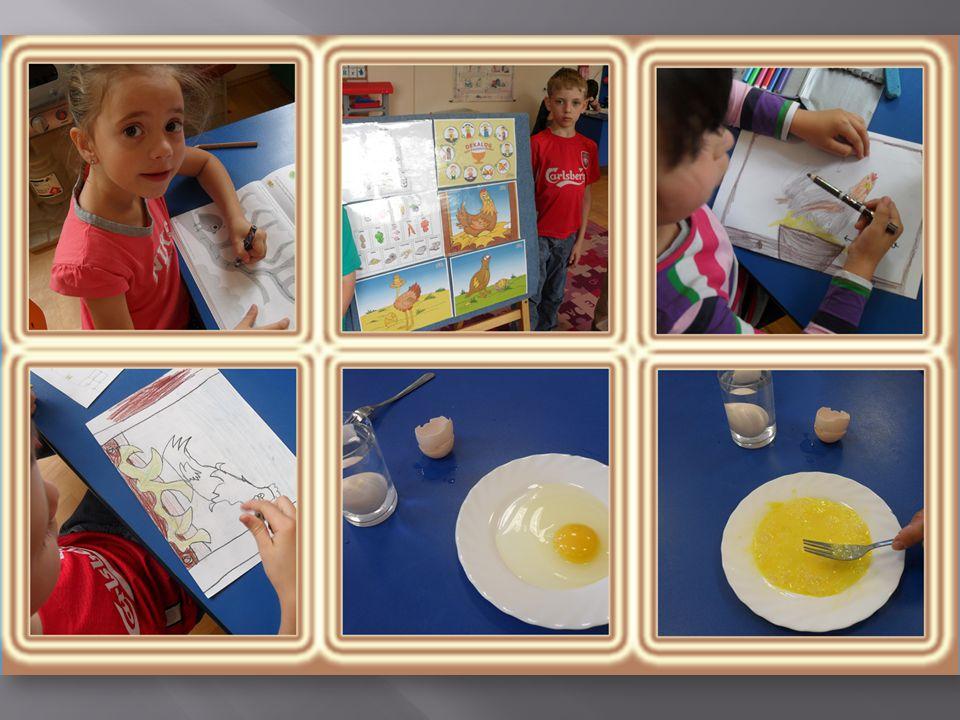  Zdrowa eko-żywność - jajko