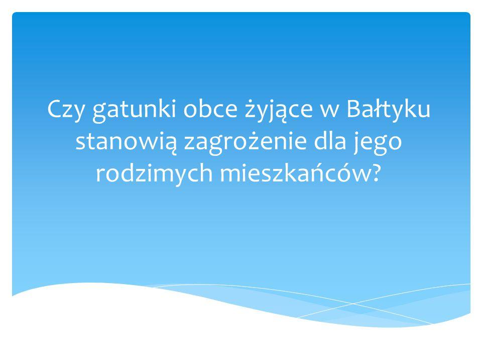Czy gatunki obce żyjące w Bałtyku stanowią zagrożenie dla jego rodzimych mieszkańców?