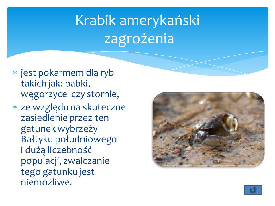  jest pokarmem dla ryb takich jak: babki, węgorzyce czy stornie,  ze względu na skuteczne zasiedlenie przez ten gatunek wybrzeży Bałtyku południowego i dużą liczebność populacji, zwalczanie tego gatunku jest niemożliwe.